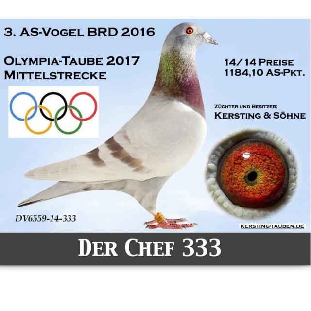 Chef 333 - Superstar