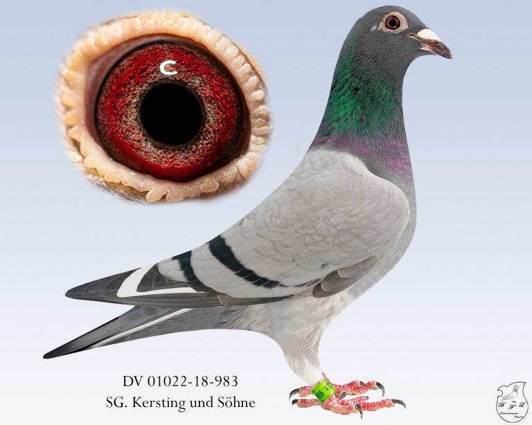 DV-01022-18-983-blauscheck