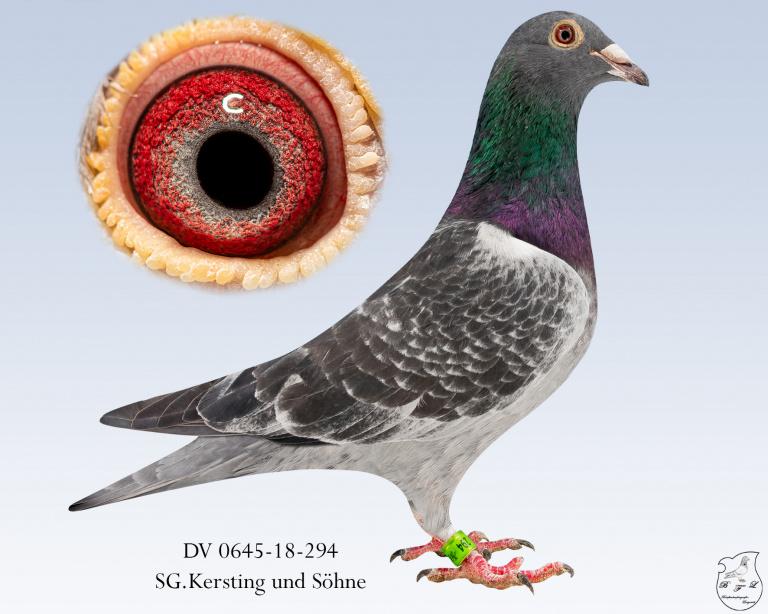 DV-0645-18-294-dgeh