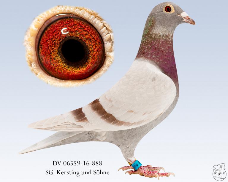 DV-06559-16-888-Fahl