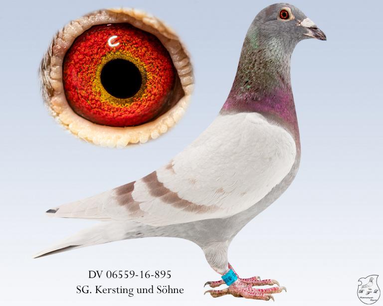DV-06559-16-895-fahl