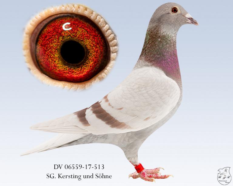 DV-06559-17-513-fahl