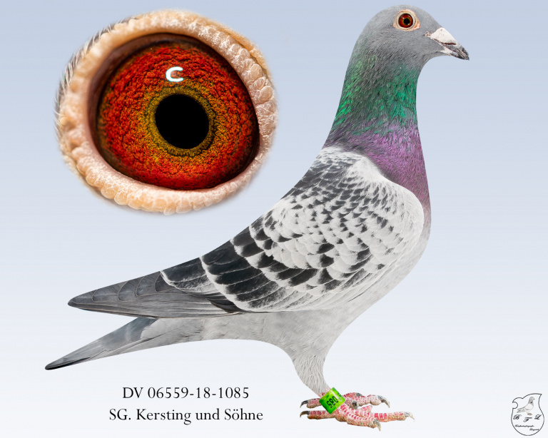 DV-06559-18-1085