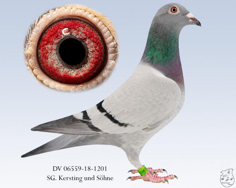 DV-06559-18-1201