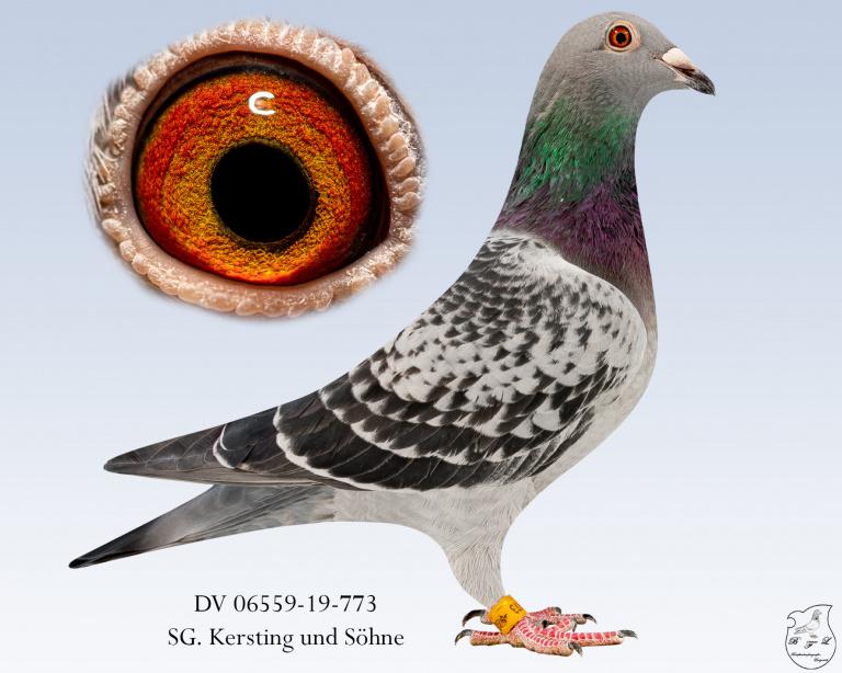 DV-06559-19-773-geh