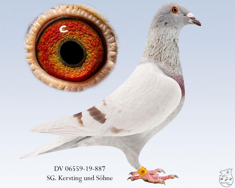 DV-06559-19-887-Fahl