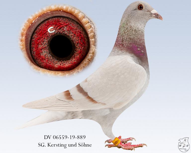 DV-06559-19-889-Fahl