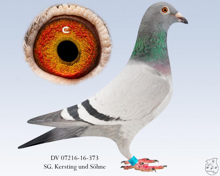 DV-07216-16-373-blau