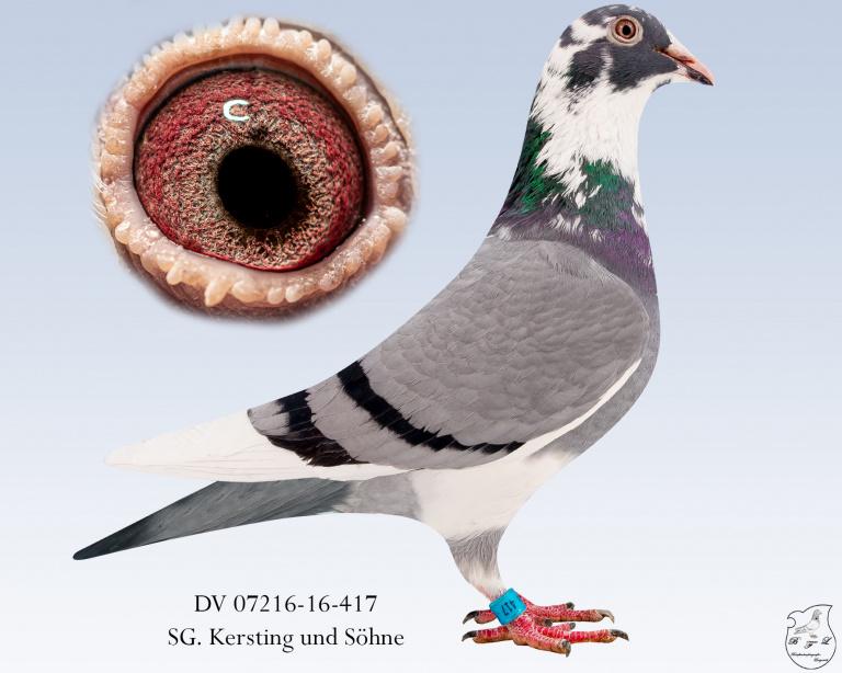 DV-07216-16-417
