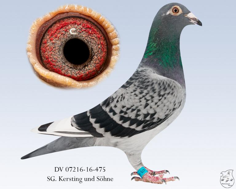 DV-07216-16-475--geh-scheck