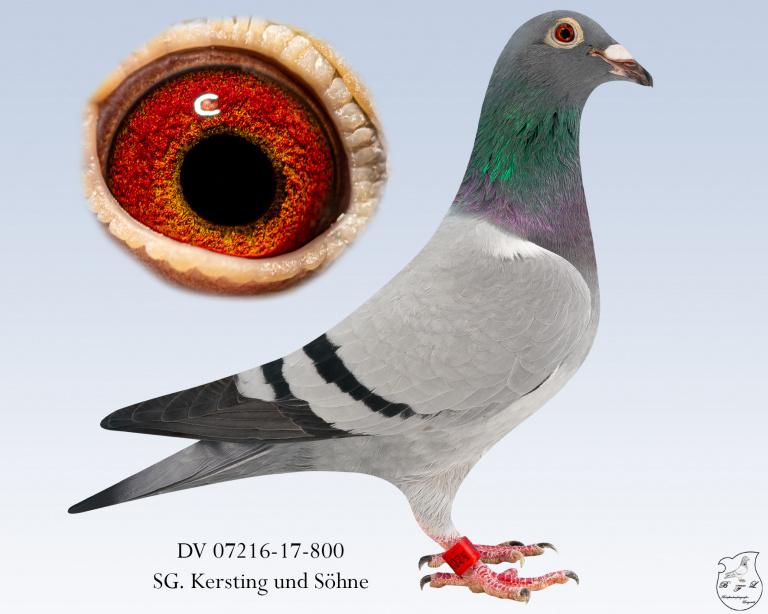 DV-07216-17-800