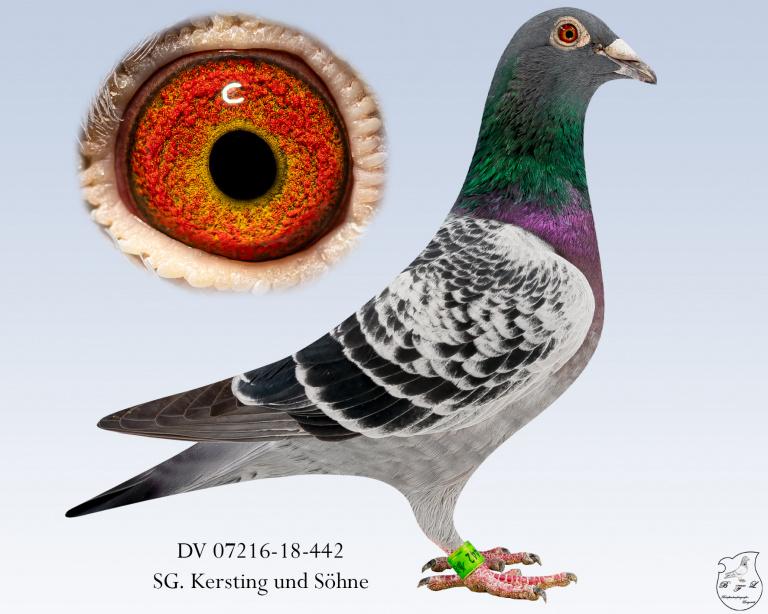 DV-07216-18-442