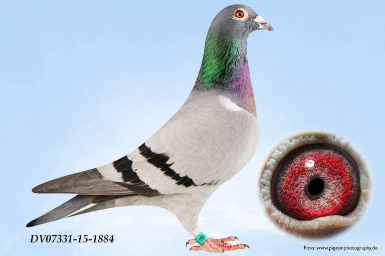 DV07331-15-1884